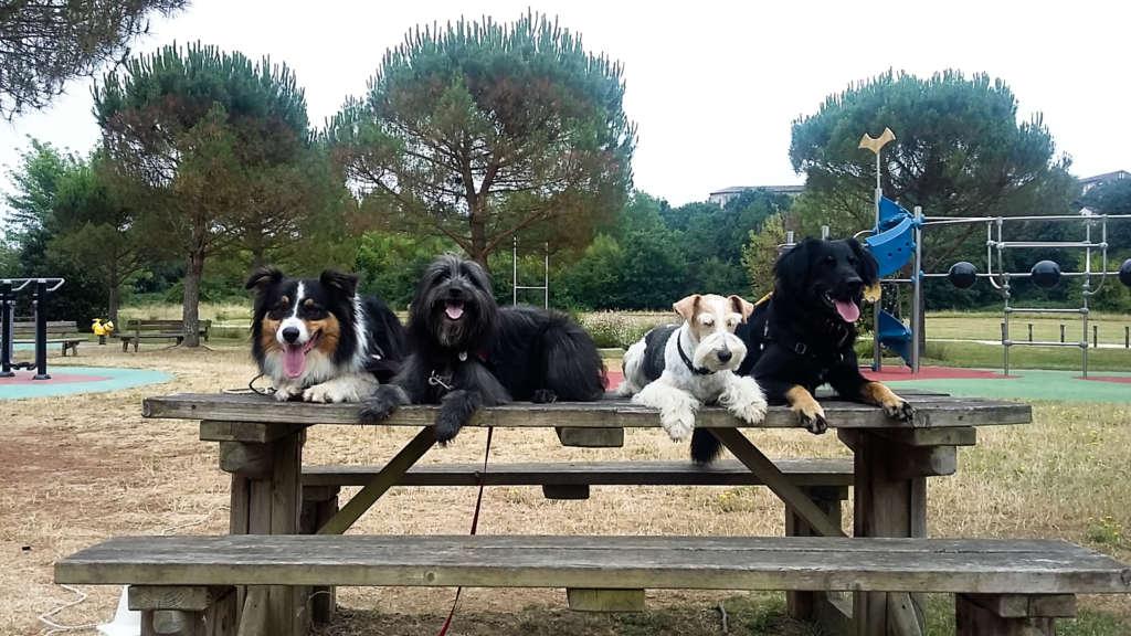 Des chients sur une table dans un parc