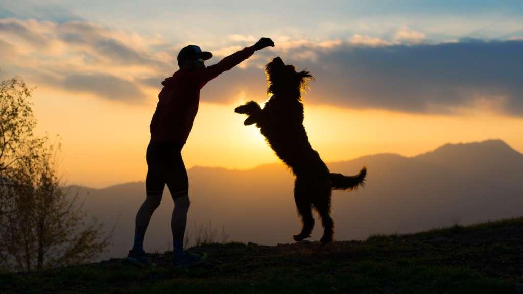 Un maître et son chien en plein exercice