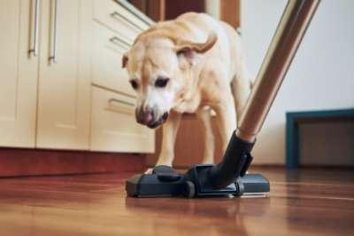 chien qui aboie à un aspirateur