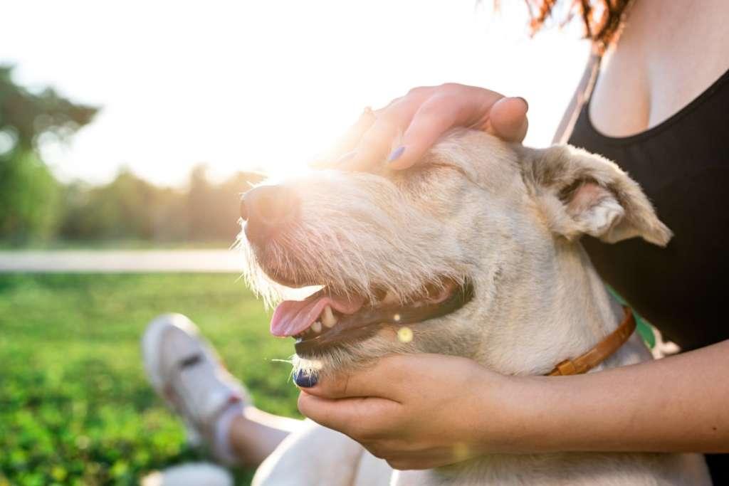 massage d'un chien en pleine nature
