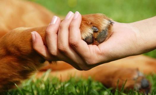 Soins energétiques sur un chien