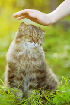 soins energetiques sur un chat