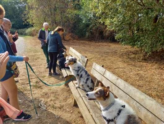 Balade au parc avec les chiens
